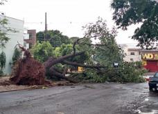 Árvore derrubada pelo vento no cruzamento da Rua Cuiabá com a Rua dos Missionários; foto: Ligado Na Redação